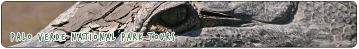 WILDLIFE & NATURE - Palo Verde National Park Tours